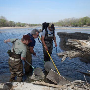 Kansas 2015. Collecting fish on the Kansas River with Louis Bernatchez and Keith Gido.